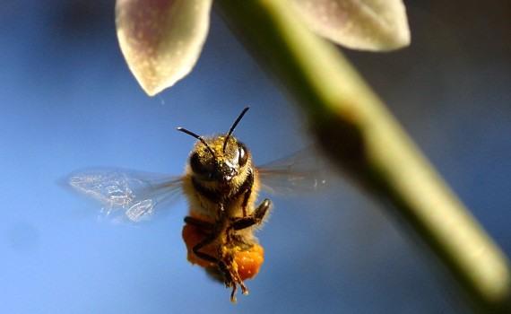 Bee saying thank you